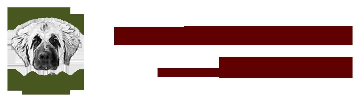Hundeschule Ingolstadt Pfaffenhofen- Bärbel Zimmermann - Amadeo